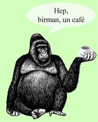 cafe-singe