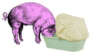 cochon-mangeur